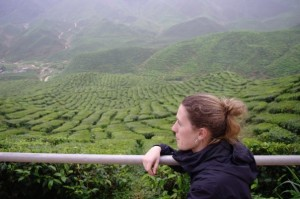 In the tea fields of Malaysia