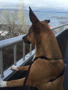 My Dog, Niya
