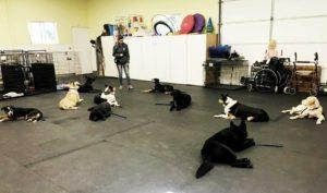 Training service dogs - 2017